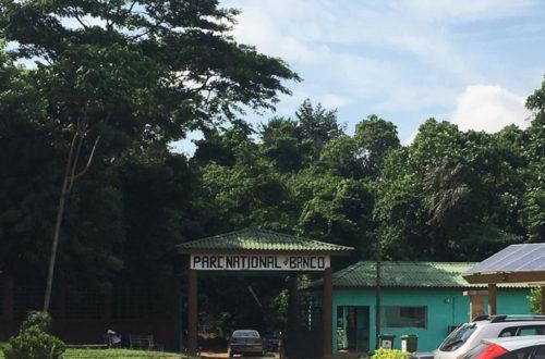 Article : Trois heures de marche et d'air frais dans la forêt du Banco