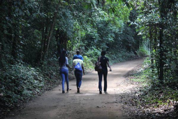 Vue de dos de trois jeunes filles marchant dans la forêt du banco